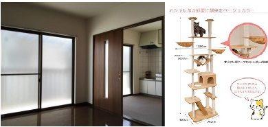 室内とキャットタワー