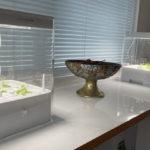 北池袋の女性専用シェアハウス「息吹noie」 水耕栽培を入れ替えました。